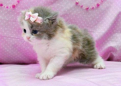 صور صور قطط كيوت 2020 خلفيات قطط جميلة جدا screen-0.jpg