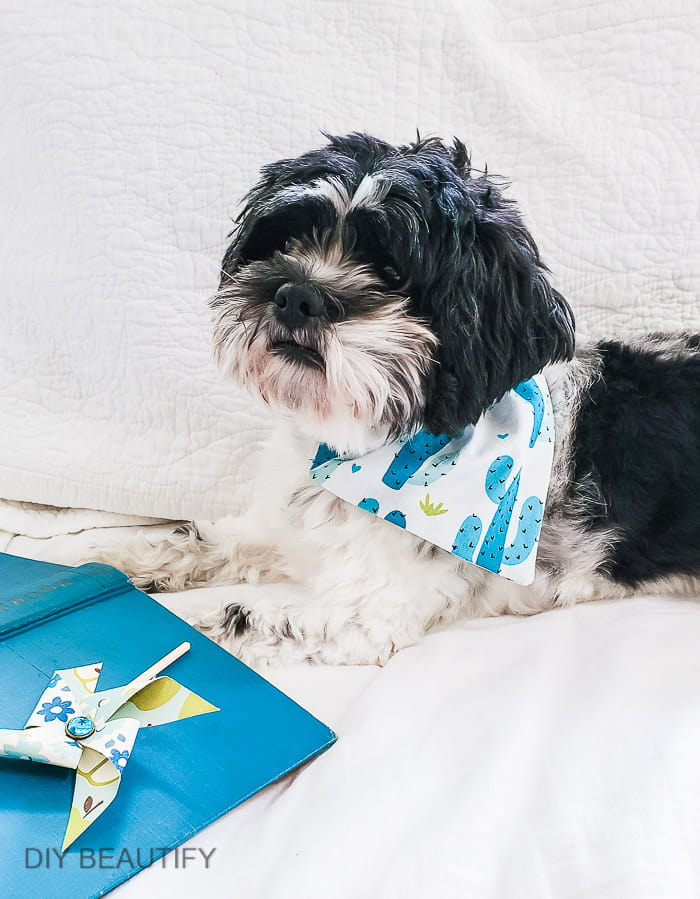 teal cactus dog bandana