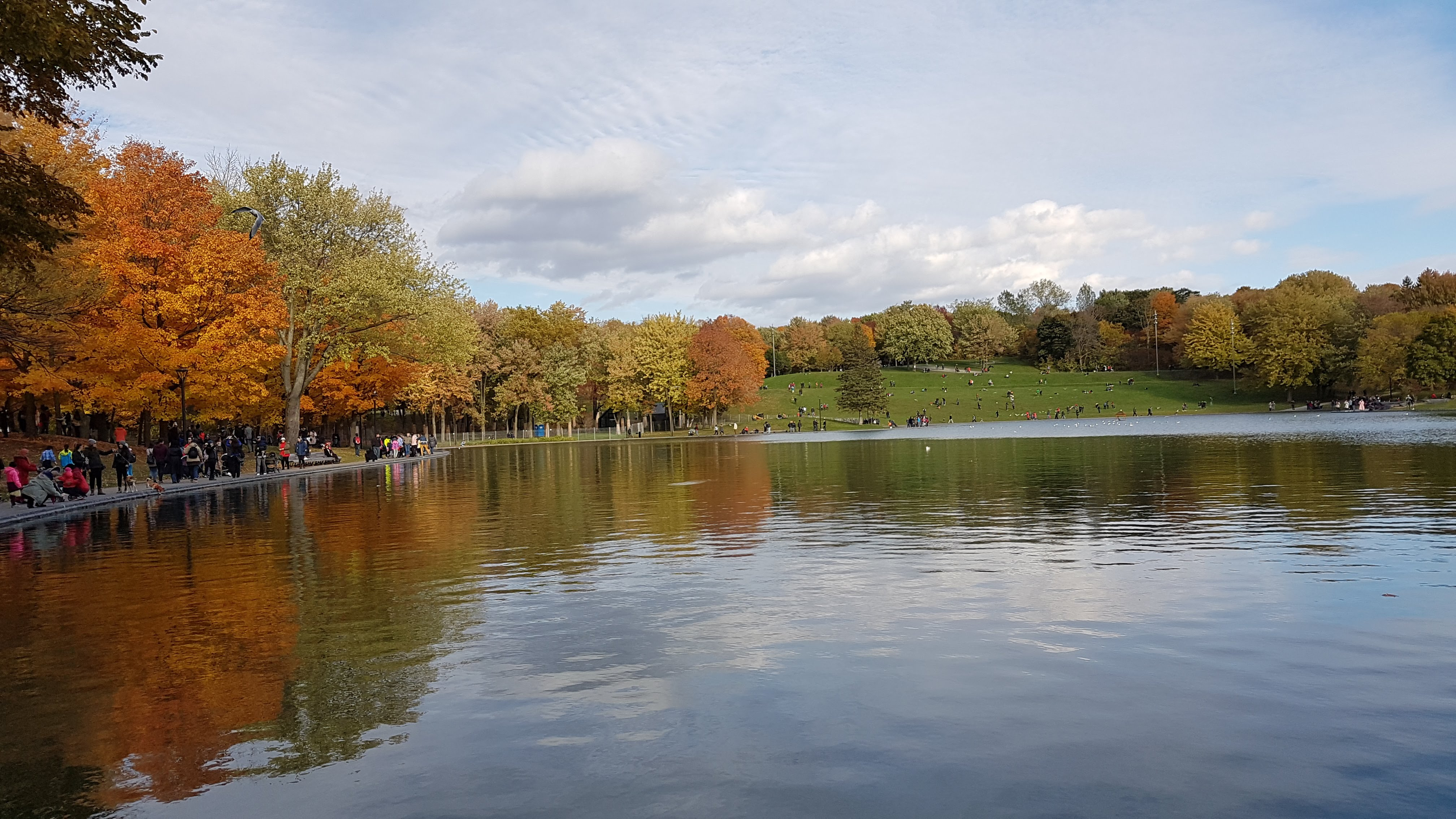 Mount Royal Park- Tips on how to do well in university