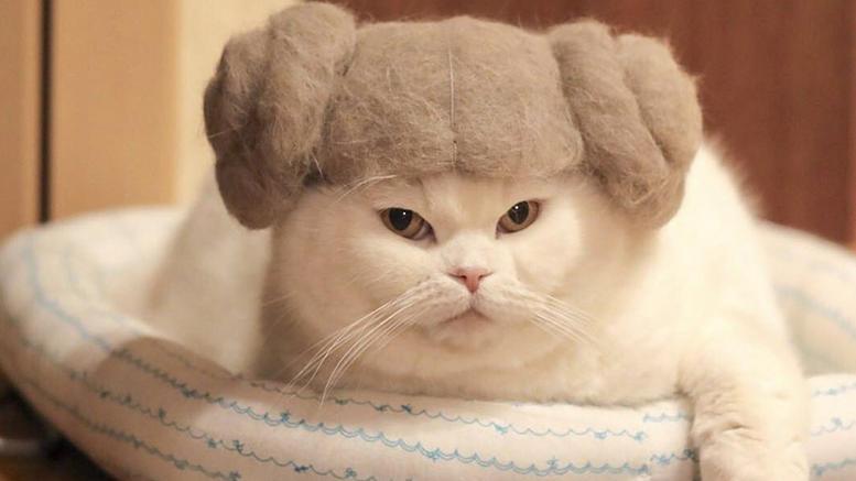 f072ce99afbc Αυτές είναι οι πιο cult γάτες του κόσμου και έγιναν viral!