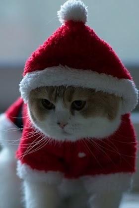 Boss Mèo Hóa Trang Thành Ông Già Noel