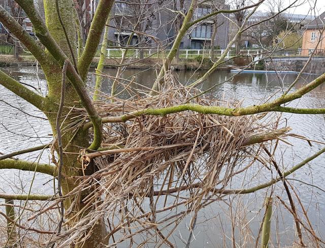 Küsten-Spaziergänge rund um Kiel, Teil 4: Entlang am Ufer der Schwentine. Vögel bauen ihre Nester, auch sonst gibt es viel Natur und Tiere auf dem Wanderweg zu entdecken.