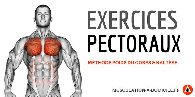 musculation à domicile exercices musclation pectoraux triceps au poids du corps et haltère