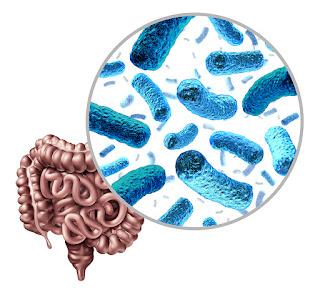 microbiome large intestine