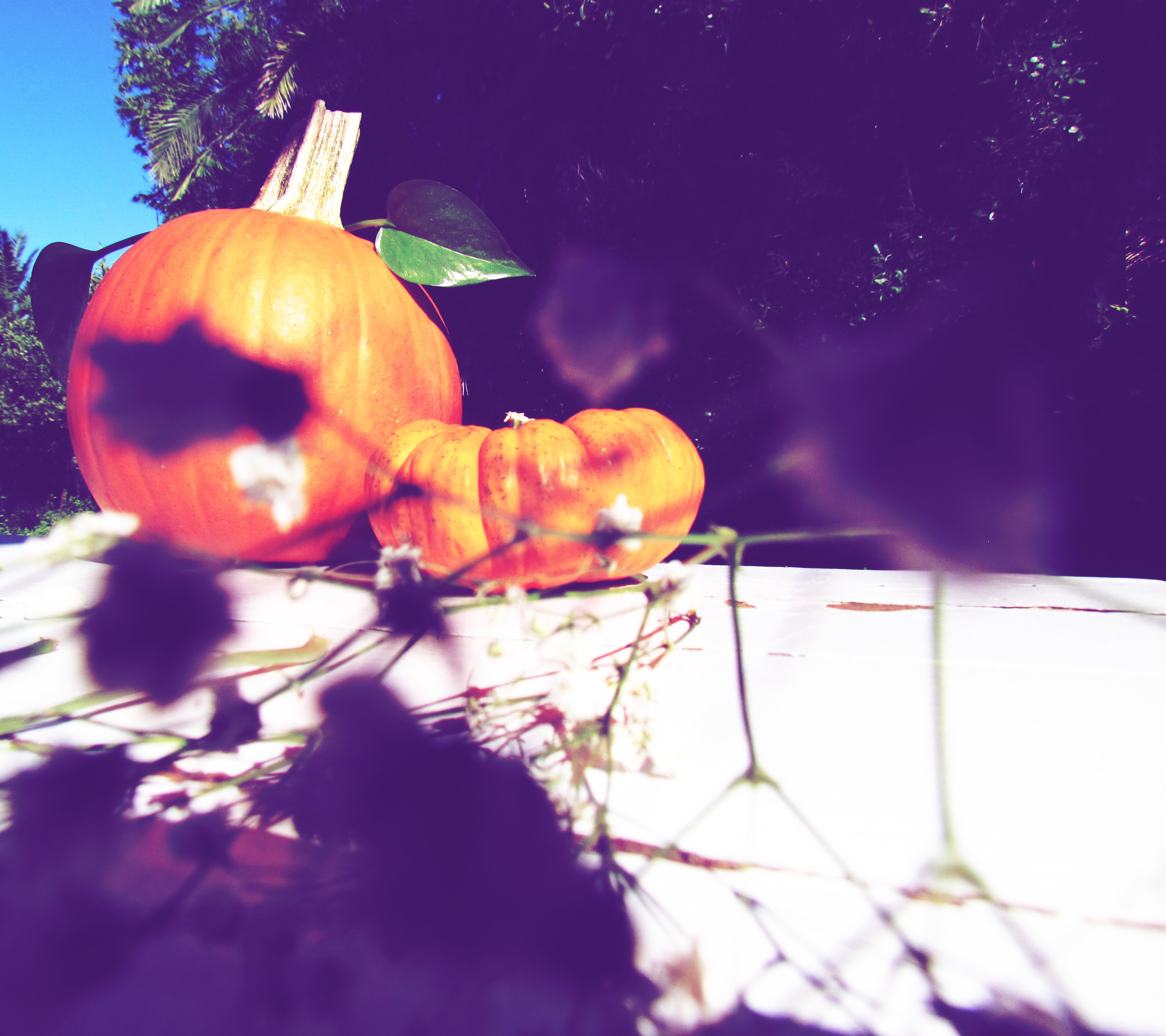 Pumpkin display table, pumpkins for sale, fall foliage, shabby chic table, farmhouse style table