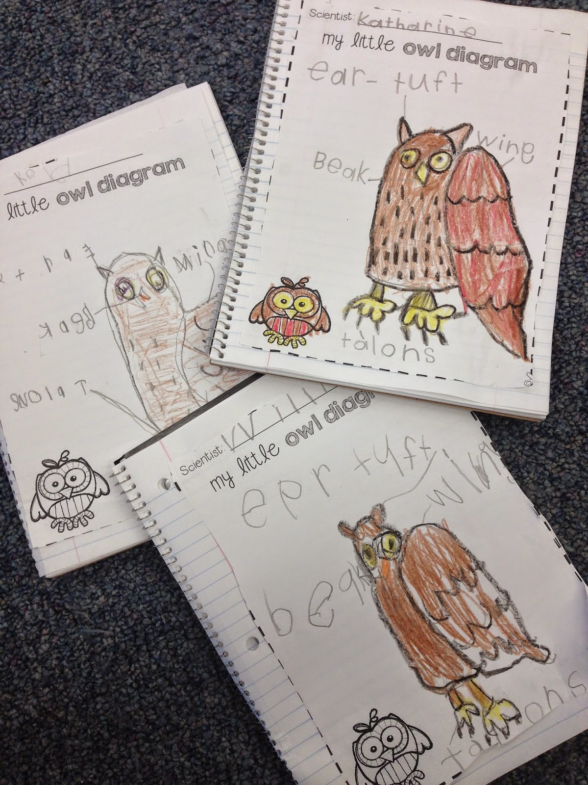 Teacher Bits And Bobs Playing With Owl Poop An Owl Pellet Freebie