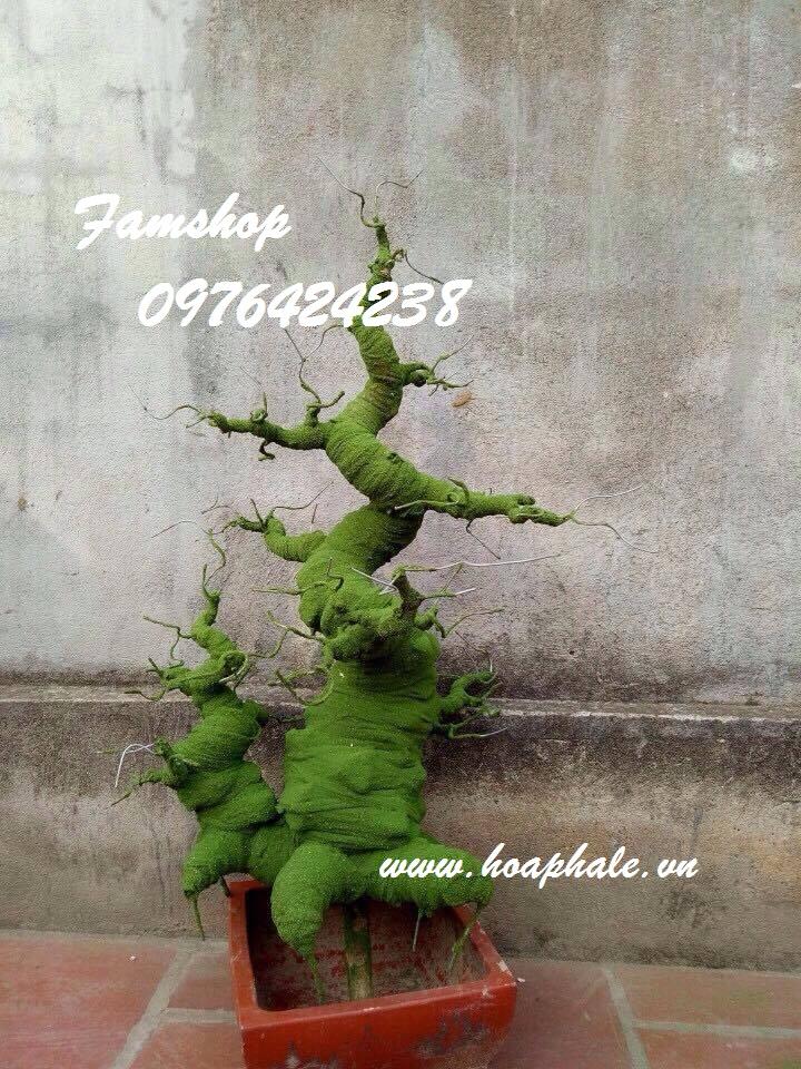 Goc bonsai mai dao the doi tai Huong Vien