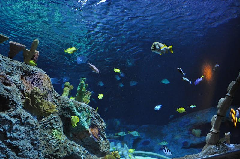 The Brady Family: At the New Sea Life Aquarium in Kansas City