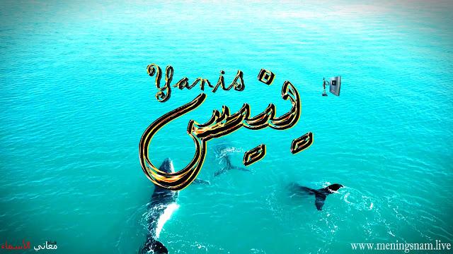 معنى اسم ينيس وصفات حامل هذا الاسم Yanis