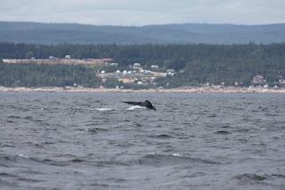 A Blue Whale Tail.
