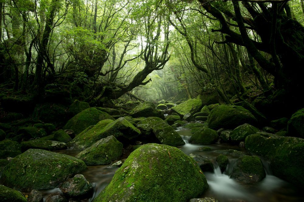 Yakushima,Japan HD Background