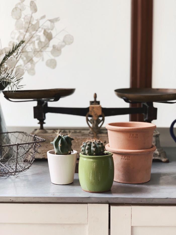Planter et rempoter ses plantes en fin d'hiver