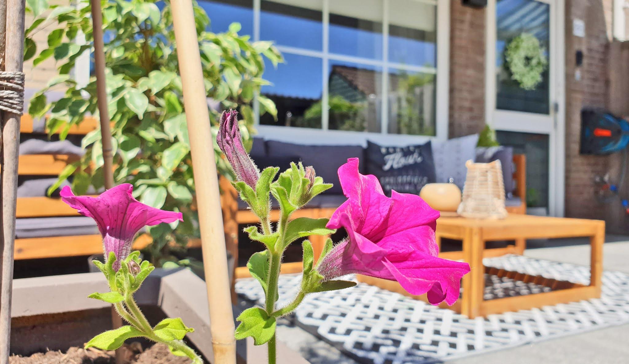 kwiaty i rośliny na taras