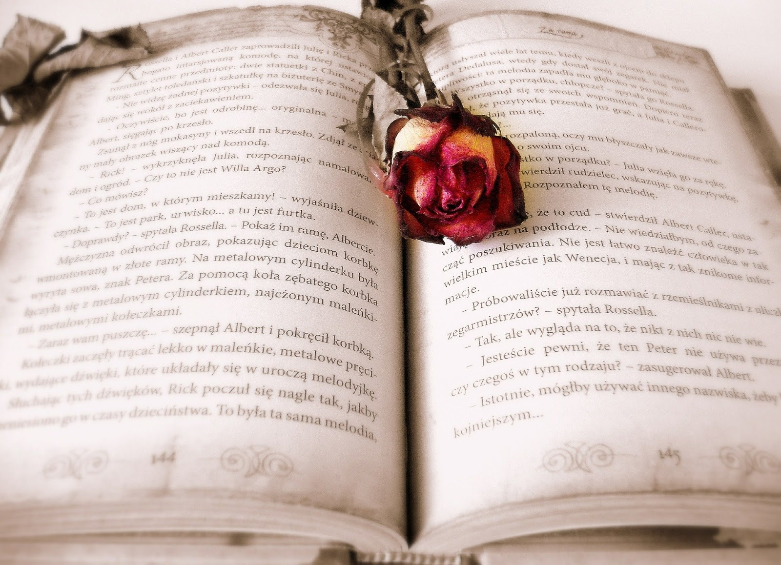 Open hardcover book with a wilted rose laying across the pages for a blog post about love story war movies