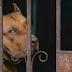 Taiwan es el primer país asiático en prohibir la carne de perro y gato... Este es el castigo