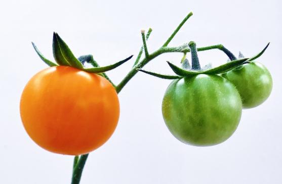 5 Khasiat Buah Tomat Untuk Kecantikan Wajah