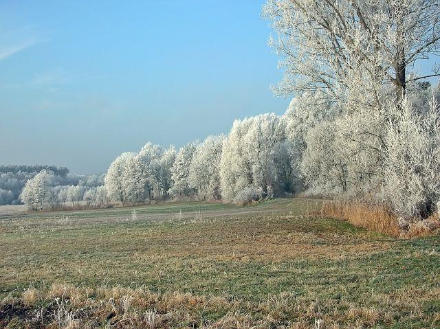 zimowa, sceneria, drzewa, polna droga