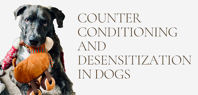 Counter conditioning and desensitization in dogs