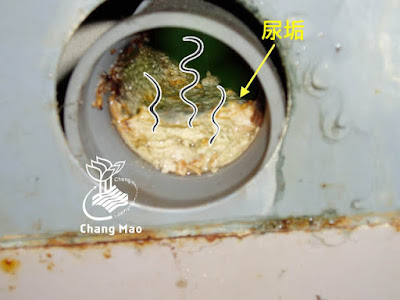 馬桶排水管有尿垢