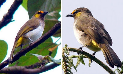 Proses Perawatan Burung Cucak Wilis Agar Rajin Berbunyi Dan Cepat Gacor Paling Akurat