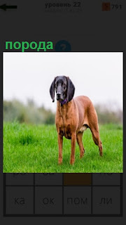 на зеленой лужайке стоит собака  неизвестной породы