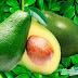 Abacate! Benefícios Dessa fruta