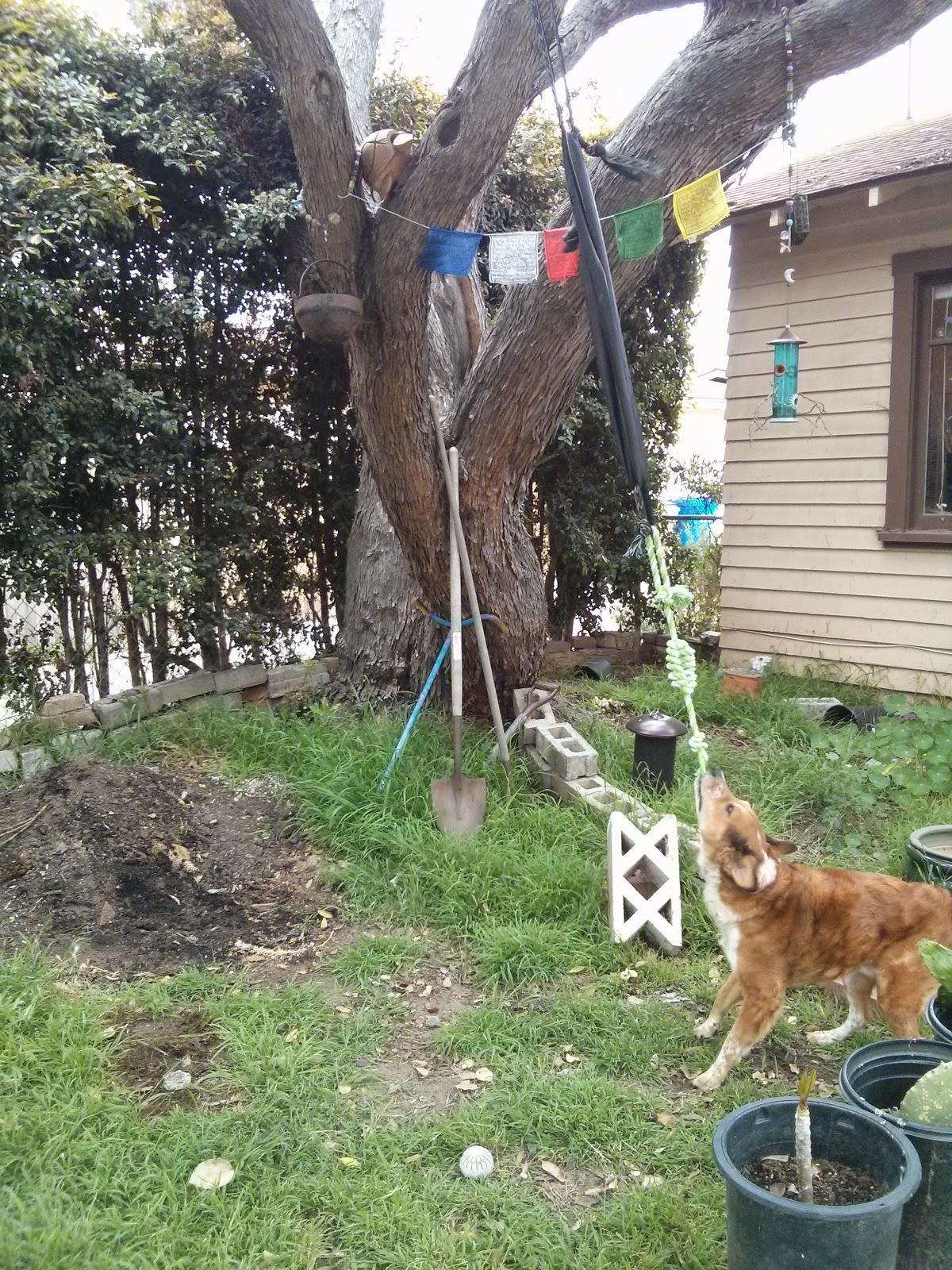 The Dog Geek Cheapass Dog Fun Make A Springpole