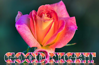 Good night image rose image