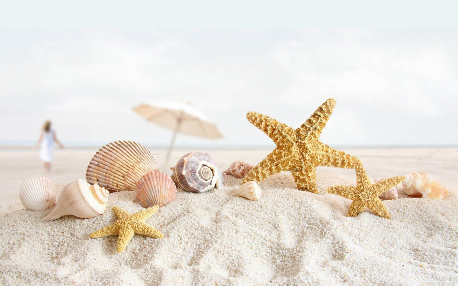 Tag: Starfish Wallpapers, Backgrounds, Photos, Images andPictures for ...