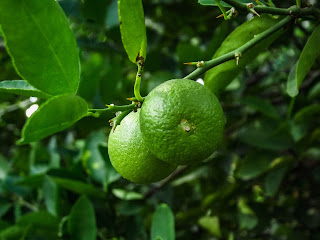 Turning Limes to Limeade