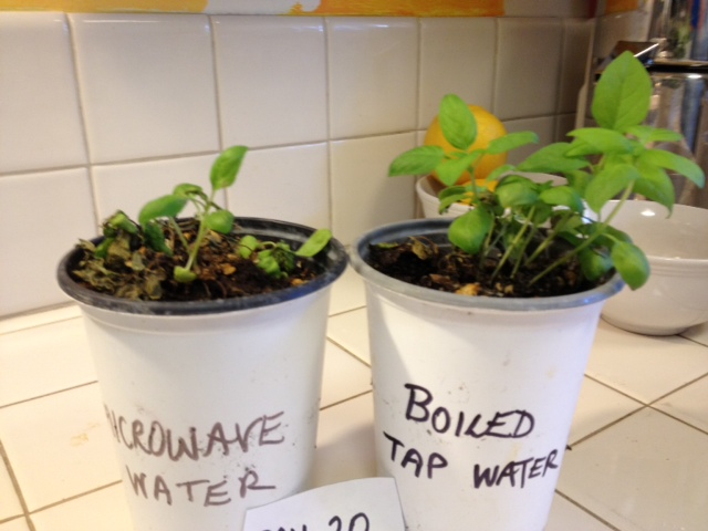 Plant species on the affects of microwave water