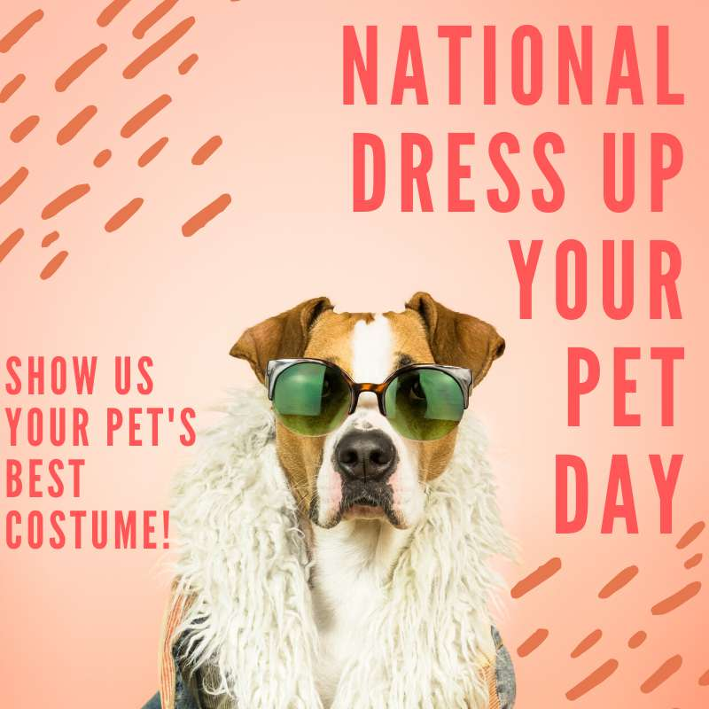 National Dress Up Your Pet Day Wishes Images