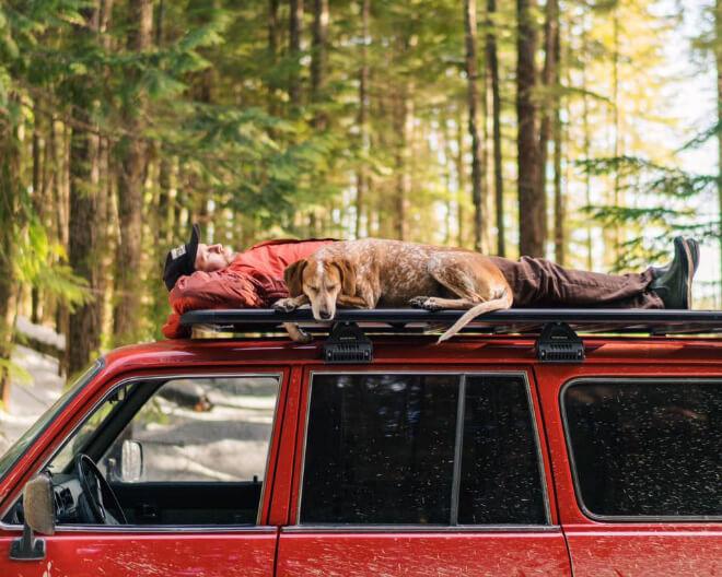 Conoce la aventura fotográfica de Theron Humphrey y su perro Maddie