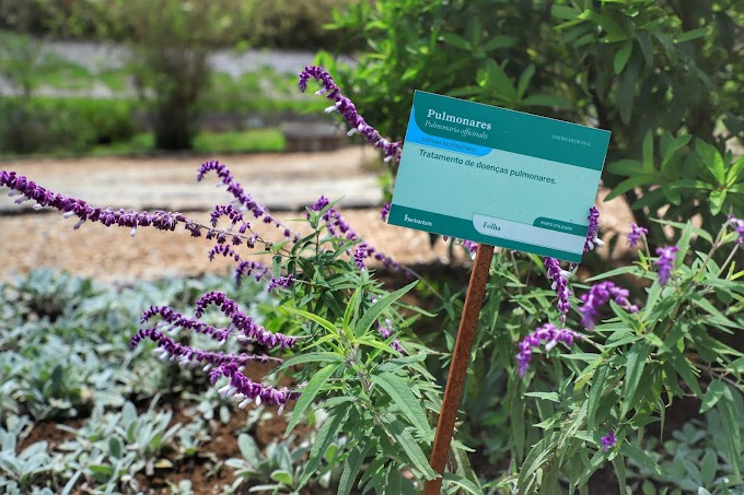 Paraná é destaque no País na produção de plantas medicinais