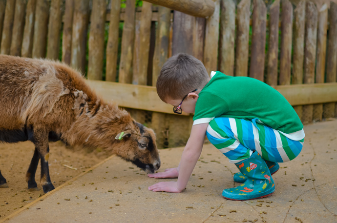 Colchester zoo, visit Essex, Colchester with children
