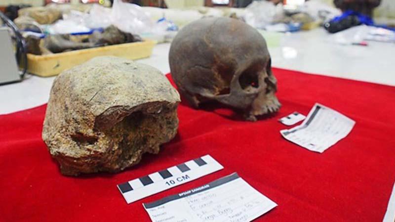 Fosil Homo Erectus Terakhir Ditemukan di Jateng