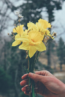 A closeup of a hand holding some daffodils and daisies. Photo by Sam Mgrdichian on Unsplash