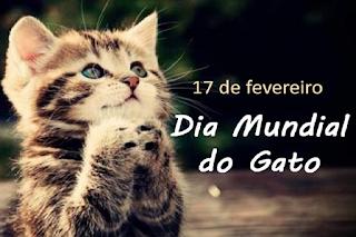 Hoje é Dia do Gato: Veja Fatos e fakes do comportamento felino