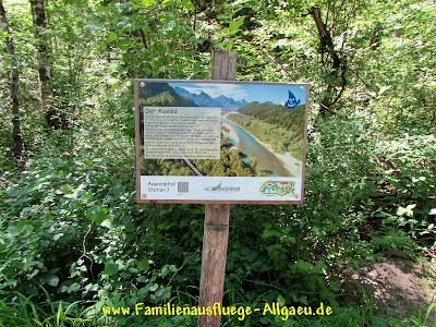 Der Auwald