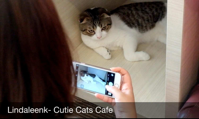 Lingtrip Main Main Ke Cutie Cats Cafe Kemang Lindaleenk