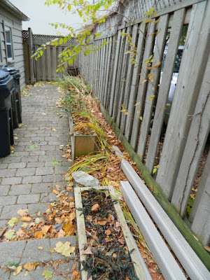 Bedford Park Toronto Fall Back Yard Cleanup Before by Paul Jung Gardening Services--a Toronto Gardening Company