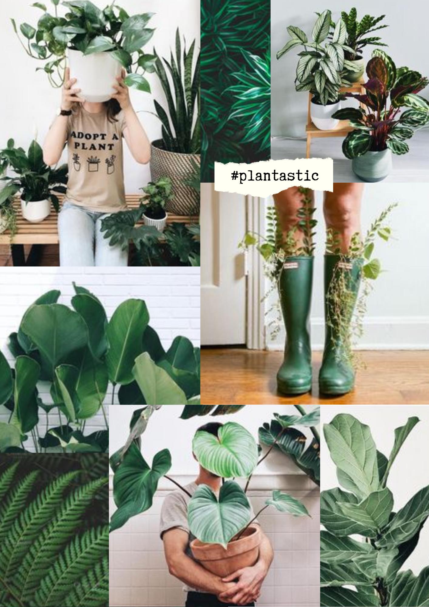 Collage van verschillende planten