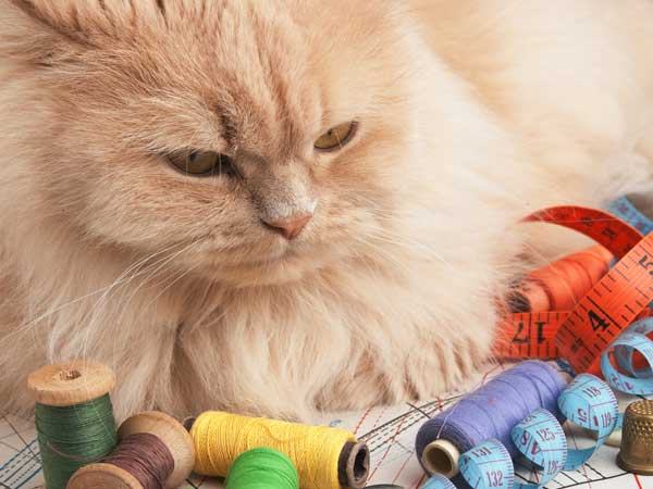 The Items in Your Home Can Kill Your Cat