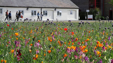 Guías prácticas para cultivar con éxito tu propia pradera florida 'Pictorial Meadows'