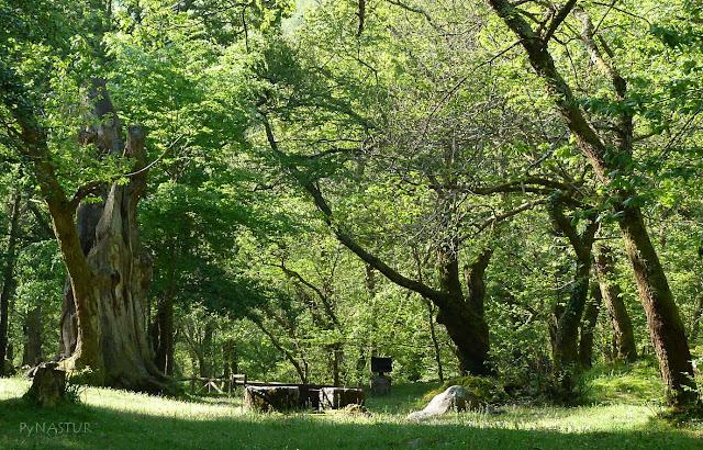 Área Recreativa de La Pensanca - Piloña - Asturias
