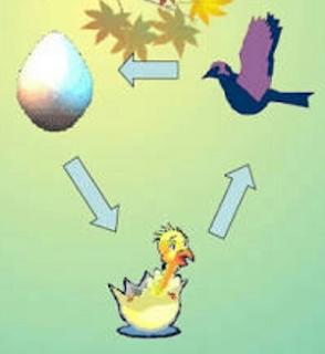 Tahapan siklus hidup Burung www.simplenews.me