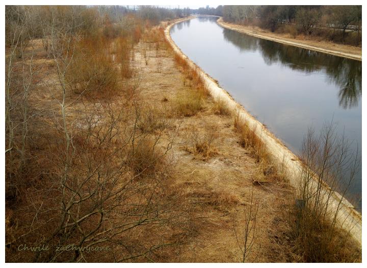 rzeka Warta Poznań, wiosna zarośla nadrzeczne