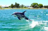https://media-cdn.tripadvisor.com/media/photo-s/03/f5/a1/c0/mandurah-cruises.jpg