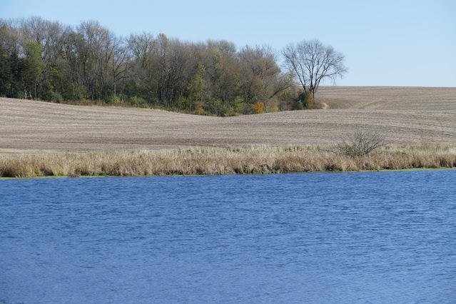 nitrogen loss water corn minnesota spring fertilizer timing