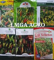 berkebun buah dan sayur, benih buah, benih sayur, jual benih, lmga agro